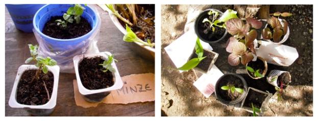 Pflanzentauschbörse 04052013 RO
